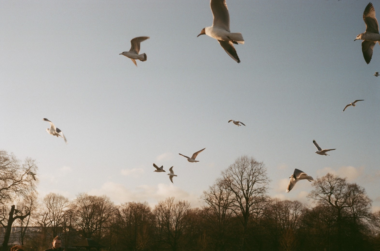 Group of birds flying in Hyde park