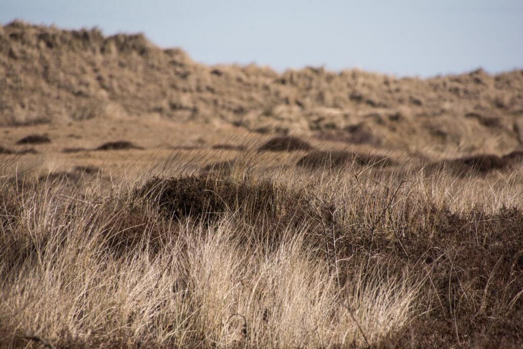 ฟากหนึ่งของเส้นทางที่เป็นภูเขาทรายปกคลุมด้วย Marram Grass