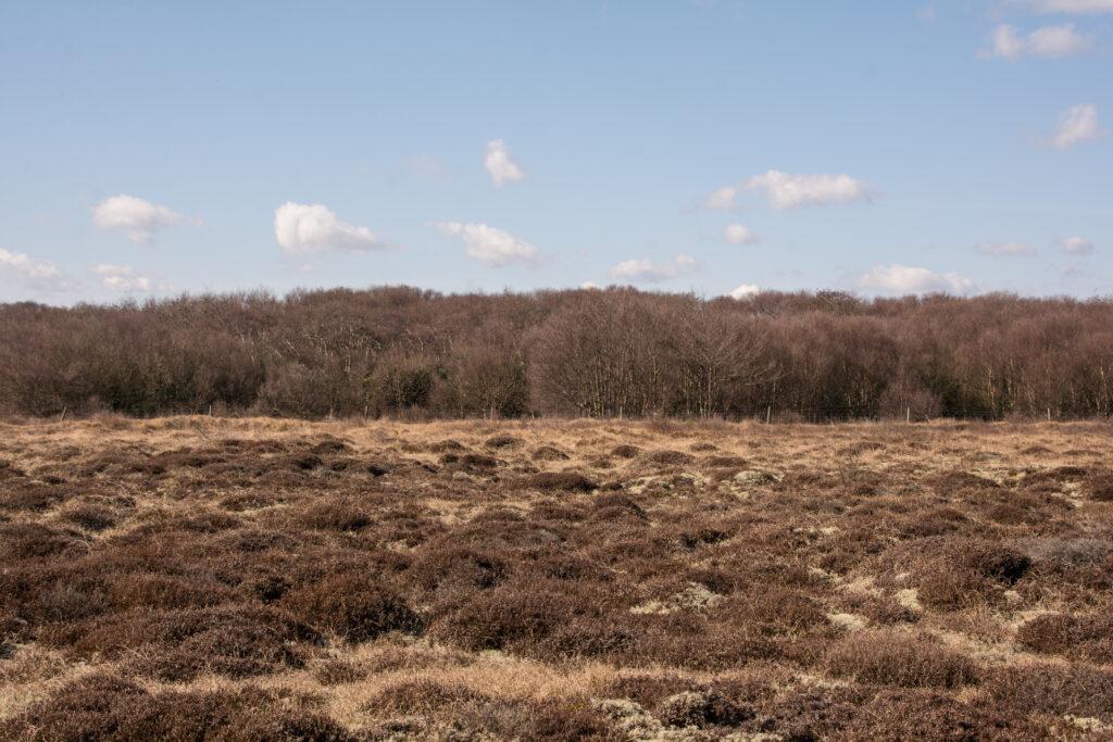 อีกฟากเป็นป่า Heather สูงลิบ แต่ยังคุมโทนสีน้ำตาล น่าถ่ายรูปมากๆ