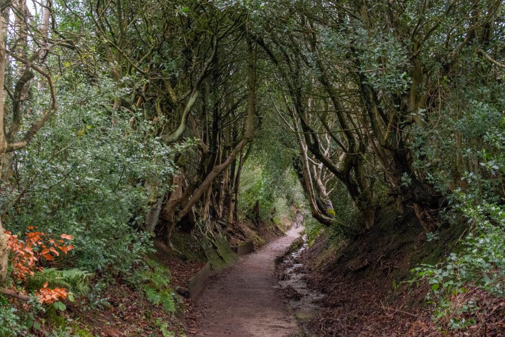 เส้นทางขึ้นเขา เหมือนกับประตูเข้าป่าศักดิ์สิทธิ์เลย สวยมากๆ