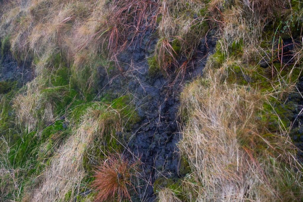 ชั้นของ Peatbog แบบใกล้ จะเห็นเป็นสีดำสนิทแบบถ่านเลย มันนุ่มและชื้นมาก เหมือนฟองน้ำ